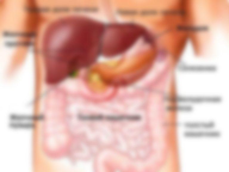 Органы человека фото поджелудочная железа