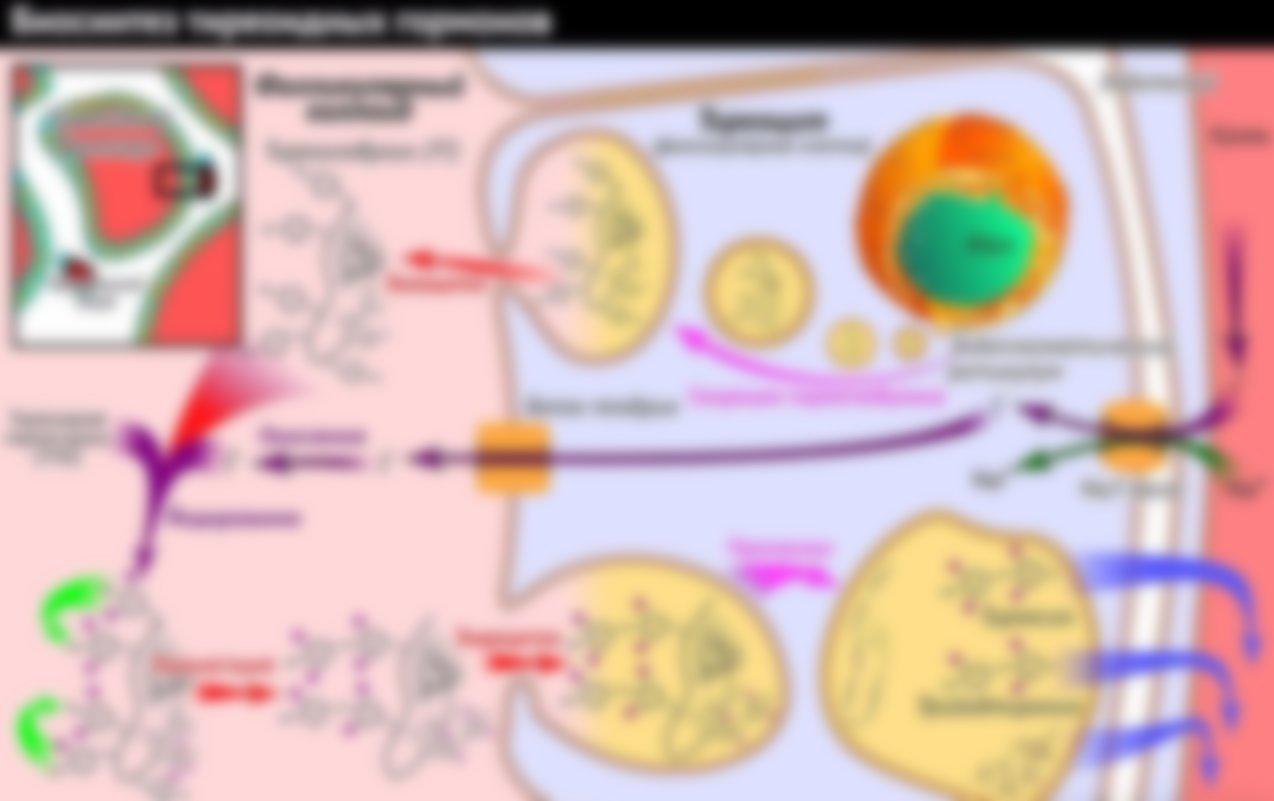 Анализ крови на гормоны расшифровка т4