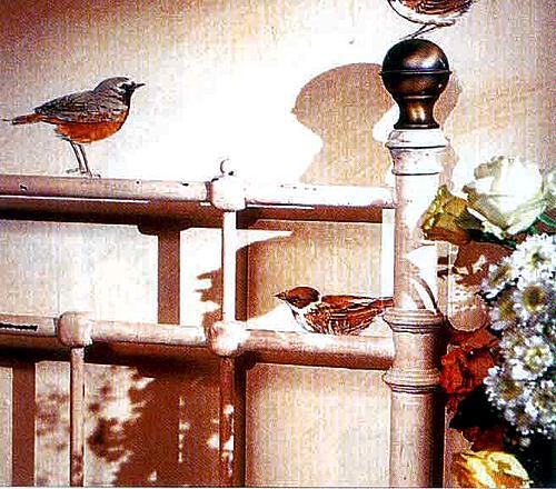 эффект тромплей птичка