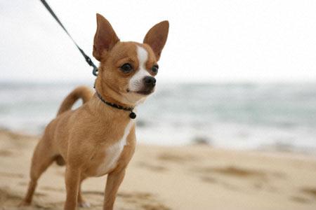 Британская компания eSure, занимающаяся страхованием домашних животных, составила рейтинг самых дорогих пород собак.