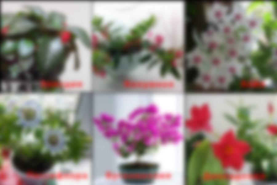 количество комнатные цветы фото и название по алфавиту ворс