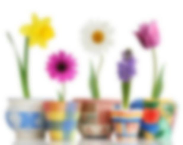 http://www.kleo.ru/img/articles/112120-778x617-Spring-Flowers-in-Pots.jpg