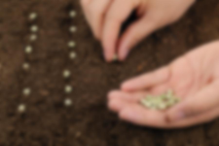 посадить семя картинка что
