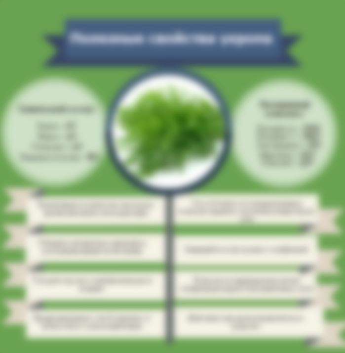 полезные свойства семена укропа для организма человека