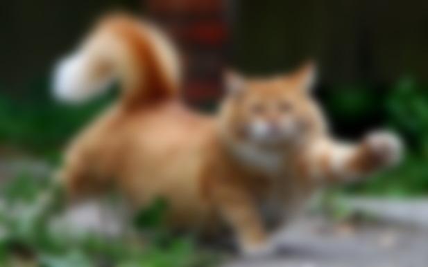 Что если кот трясет хвостом но не метит