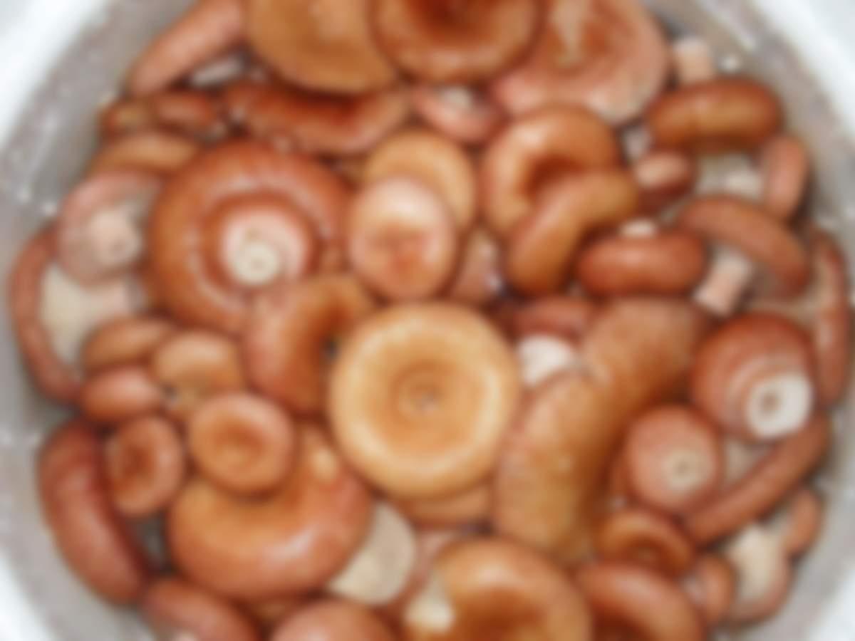 Как солить волнушки в домашних условиях холодным и горячим способом рецепты на зиму