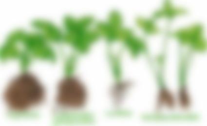 можно посадить клубнику в октябре