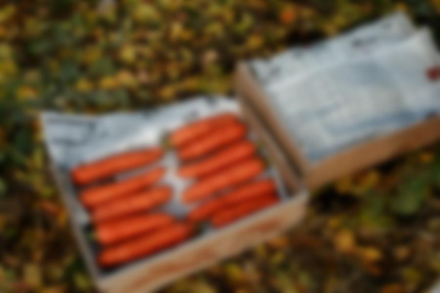 Уборка моркови: когда копать с грядки и собирать на хранение