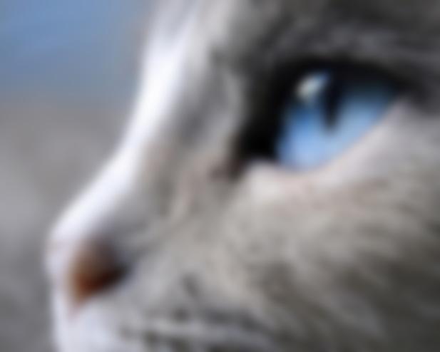 О чем говорят кошки