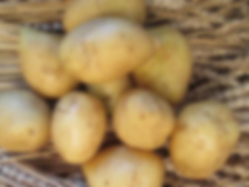 своего происхождения гала картофель характеристика фото спать было страшно