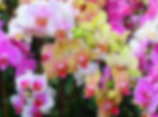 Как ухаживать за Орхидеей в домашних условиях после покупки