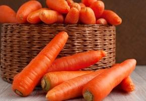 Лучшие сорта моркови для Сибири для открытого грунта