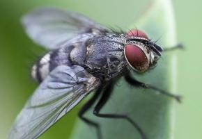 К чему снятся мухи во сне женщине и мужчине