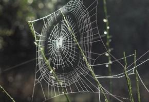 К чему снится паутина во сне для женщины и мужчины