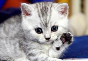 Как избавиться от запаха кошачьей мочи: 100% результат