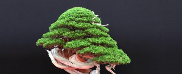 Как вырастить бонсай из семян в домашних условиях?