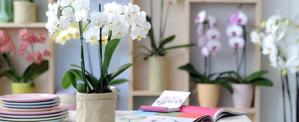 Какие комнатные цветы приносят в дом счастье и благополучие по фен шуй: фото