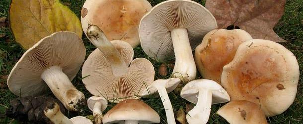 Суп из сушеных грибов горчит как спасти. Как избавится от горечи в грибном супе. Почему горчат сушеные лисички и как избавить грибы от этого недостатка