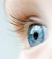 Британские ученые учатся выращивать искусственные глаза