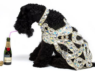 Собачьи бриллианты: в Лондоне открывается неделя высокой моды для собак