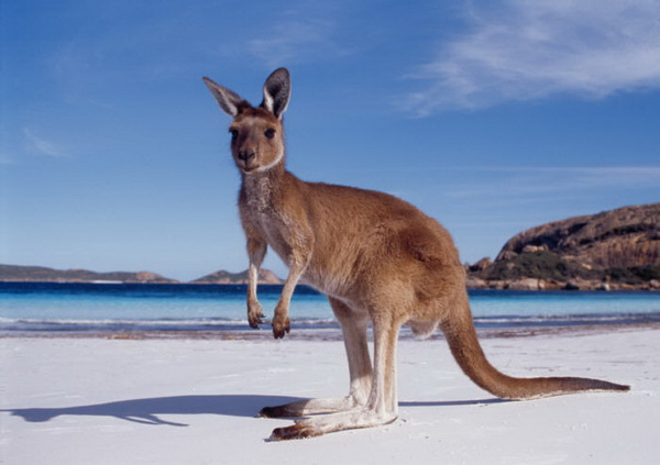 Картинки по запросу фото Австралия