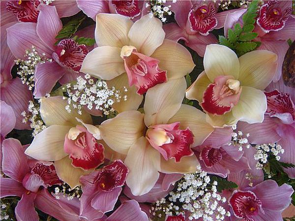 Открытки с орхидеями на день рождения