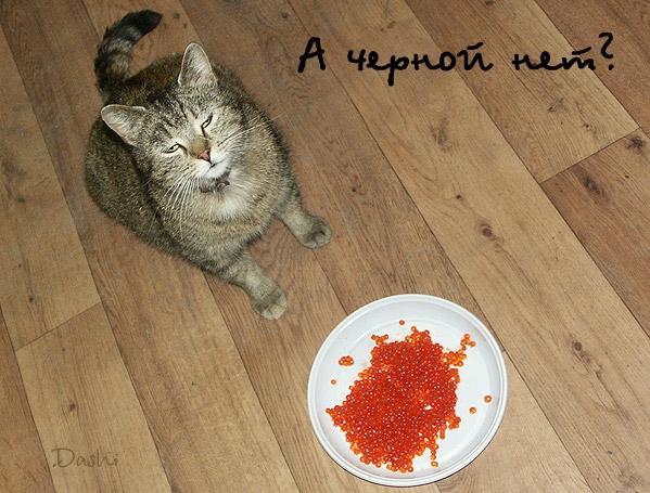 интернетах мало картинки красная икра приколы продукция мясокомбината